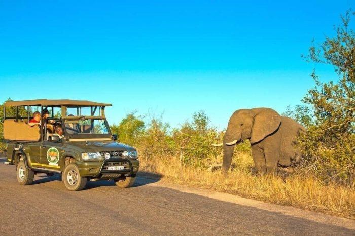 Half day Kruger morning / afternoon safari