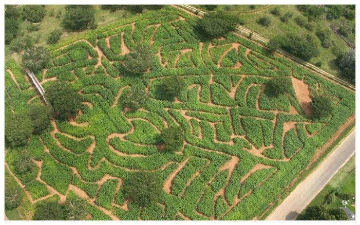 The Maze Tour