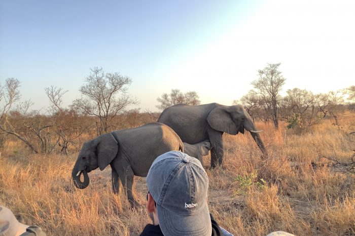 Luxury Kruger Safari 4 days