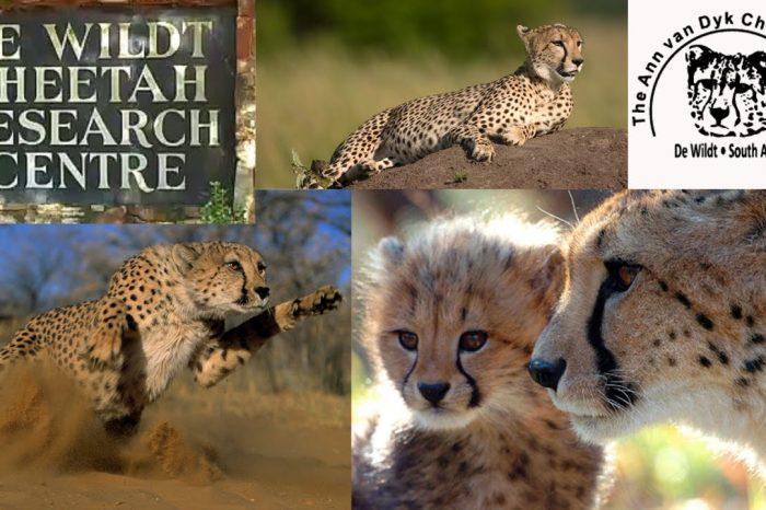De Wildt Cheetah Center